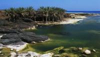 «عذراء اليمن الفاتنة» .. «جزيرة سقطرى» أغرب جزر العالم