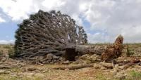 مناقشة خطورة استخراج أحجار الشعاب المرجانية في سقطرى