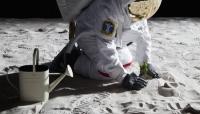 الصين تكشف عن نمو أول بذرة زراعية على سطح القمر