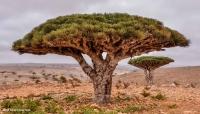 """تقرير يحذر من نوايا طويلة الأجل تخطط لها أبو ظبي تجاه جزيرة """"سقطرى"""" اليمنية (ترجمة _خاصة)"""