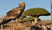 """اليونسكو تطلق حملة دولية تستمر ثلاثة أشهر للتوعية بالتراث الغني لـ """"سقطرى"""" اليمنية"""