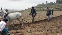 أكثر من 20 مليار دولار خسائر الزراعة في اليمن جراء الحرب