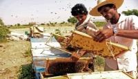 العسل اليمني يعاني مرارة الحرب
