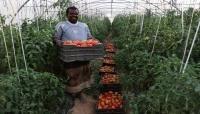 انعدام الديزل يهدّد الزراعة في اليمن ..وفقدان آلاف فرص العمل