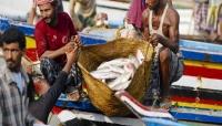 غلاء فاحش للأسماك... والإمارات تحرم اليمنيين من أهم منتجاتهم
