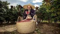اليمن يحتفل باليوم العالمي للقهوة وإشهار نادي البن في تعز (تقرير خاص)