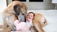 هل تشكل الحيوانات المنزلية خطرا؟