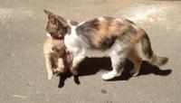 قطة تحمل صغيرها إلى مستشفى طلباً للعلاج
