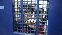 11 أسيرا في سجون الاحتلال يواصلون إضرابهم عن الطعام
